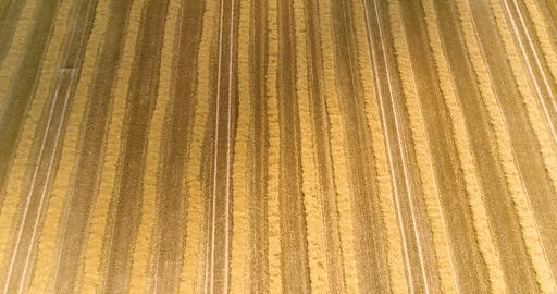 Freshly harvested wheat field Footage