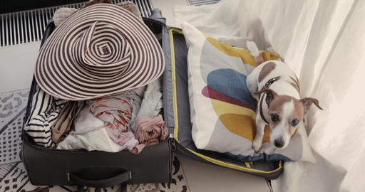 Small dog is lieing in a suitcase Footage