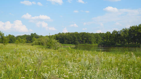 Panorama of forest landscape. Meadow, lake and forest Live Action