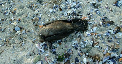 A dead bird in the beach 4k Footage