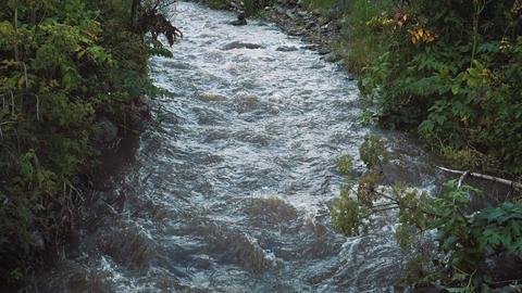 Beautiful mountain creek Footage