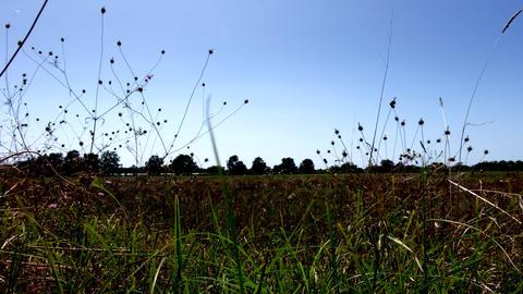Birds raising the flight from a crop field Footage