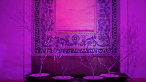 Illuminated wall with unusual decor in oriental style, eastern culture, hotel Live Action