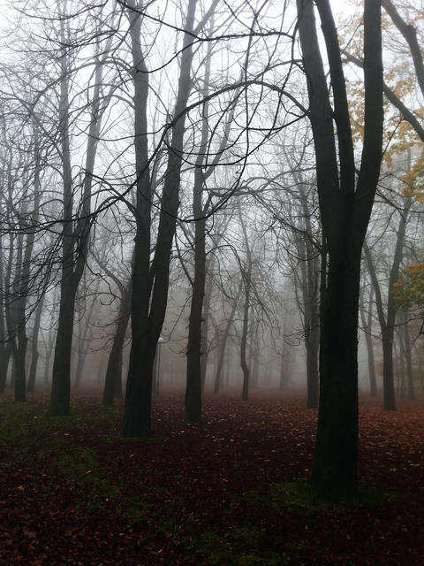 Gloomy Park Fotografía