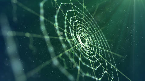 Spider Web in the Green Background Animation