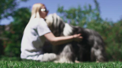 Woman caress her dog sitting on grass Footage