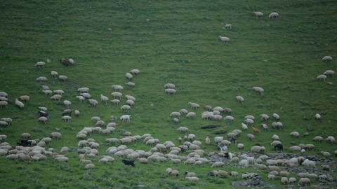Sheep graze on a green slope high in the mountains GIF