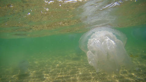 Floating jellyfish under water in the Black Sea ビデオ