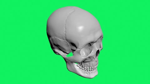 A model of human skull isolated on green screen Animation
