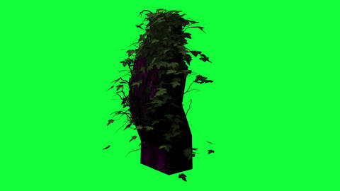 animation - Ivy growing over a pillar on green screen Animation