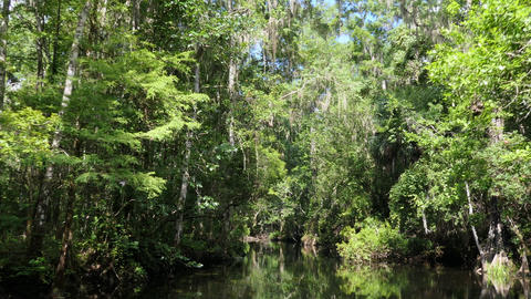 Nature River River At Wakulla Springs State Park Florida USA Live Action