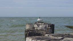 Pair of Seagulls and Ocean Panorama Footage