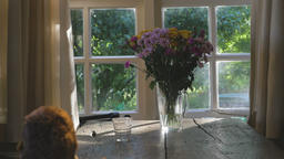 Still Life of Daisies Near Window Live Action