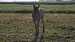 Cute Foal on Grass Footage