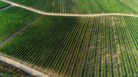 Rheingau-Taunus area, Germany - vineyards Archivo