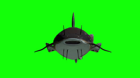 Animated catfish with green screen Animation