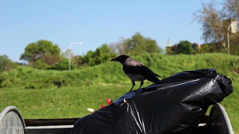 Crow Live Action