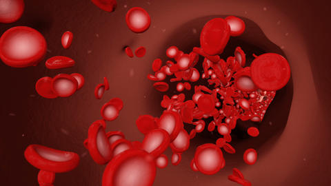 Red blood cells floating in a blood vein Animation