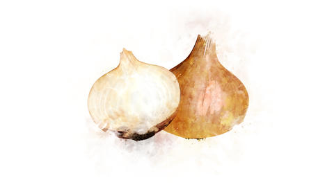 Onion on a transparent background Animation