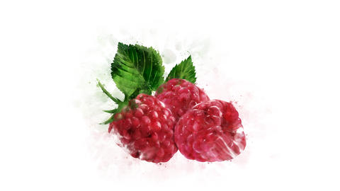 Animation of watercolor drawing of Raspberry Animation