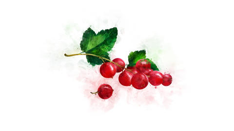 A video illustration of Redcurrant Animation