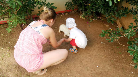 4k video of young smiling mother with adorable toddler boy feeding white rabbit Footage