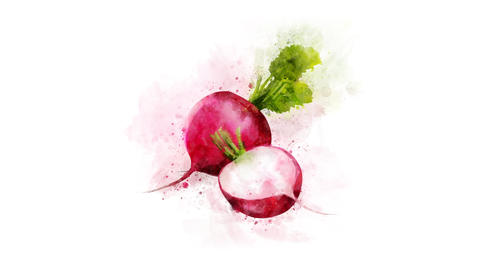 Radish animation for video design Animation