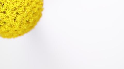 Slowly revolving Craspedia Billy Ball flower Footage