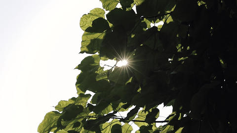 Sun shining through the leaves of the tree Footage