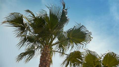Waving palm trees at Cote D'Azur France Live Action