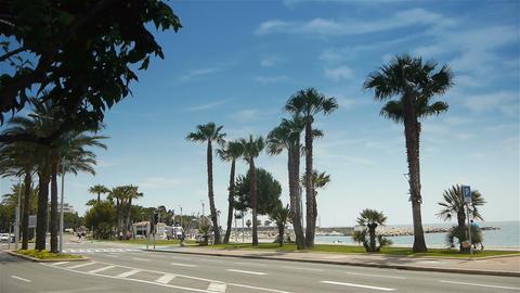 Palm tree boulevard, Cote D'Azur France Live Action