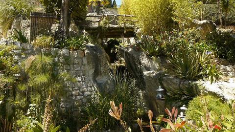 Tropical plants in the park at Monaco, Cote D'Azur France Live Action