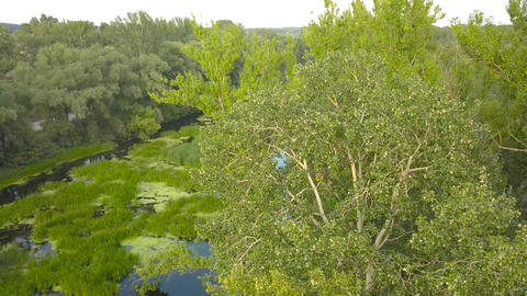 Flight over the river overgrown with grass, Ukraine surrounded by trees - aerial Footage