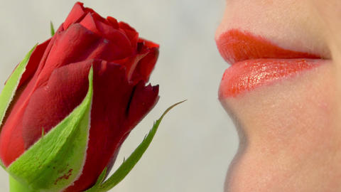 Close up of smelling a red rose 4K Stock Video Footage