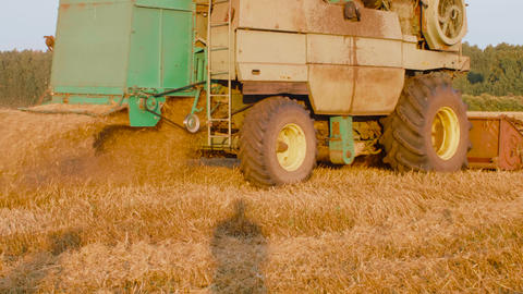 Agricultural harvester harvesting autumn crop on farm field at summer day GIF