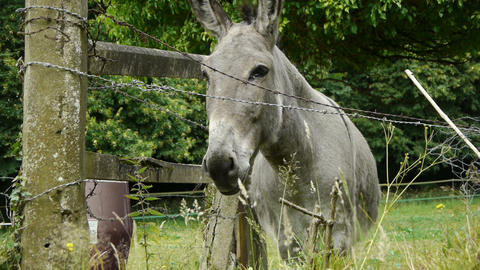 Donkey at a little french village ビデオ