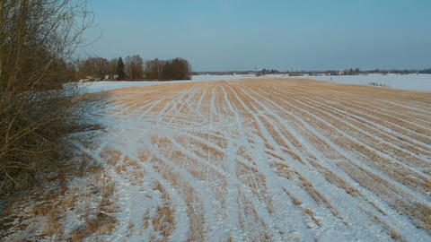 Midwinter agriculture field with crop stubble, aerial view Live Action
