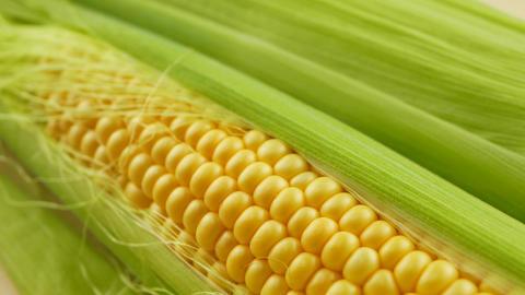 Grains of ripe yellow fresh corn on cobs Archivo