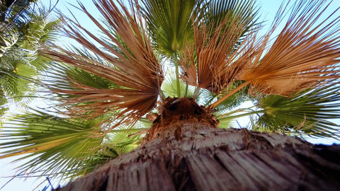 4k video from the ground on high palm tree against bright blue sky Footage