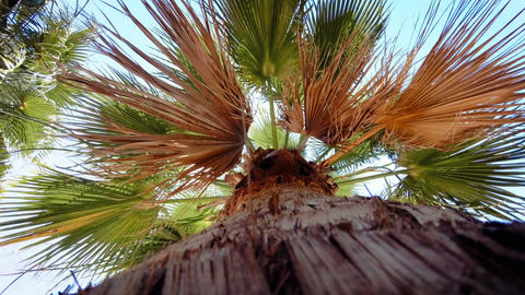 4k video from the ground on high palm tree against bright... Stock Video Footage