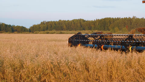 View of modern combine harvester in action on countryside Live Action