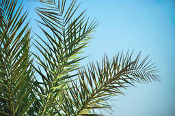 Light Green Tropical Palm Leaves On The Beautiful Blue Summer Sky フォト