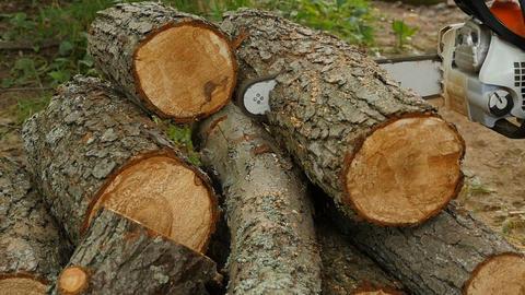 Firewood sawmills chainsaw Footage