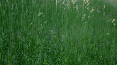Juicy young grass on a meadow Footage