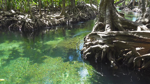 Tha pom mangrove forest in Krabi, Thailand Footage