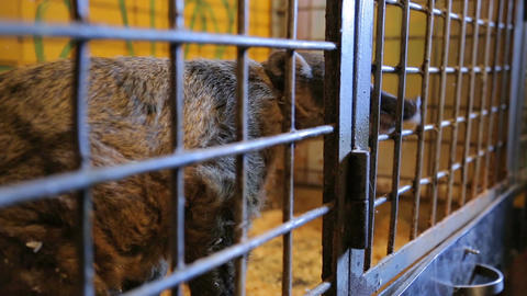 Animal shelter, raccoon, coati in a cage Live Action