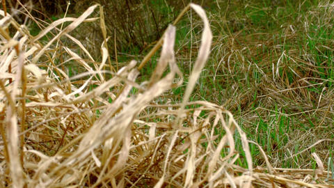 Dry twigs and grass green grass in field Footage