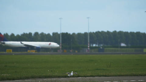 A seagull sits on a runway Live Action