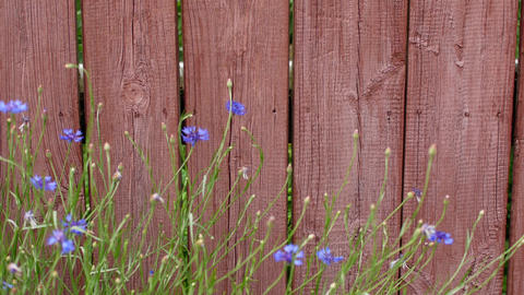 An old fence with peeling paint and flowers in a small town in the United States Footage
