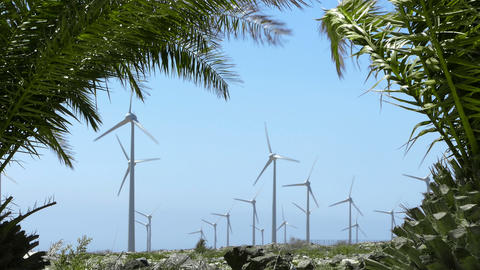 Wind-turbines and palms Footage